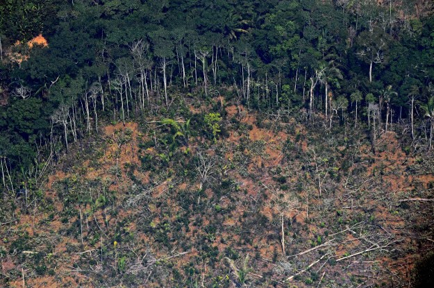 Stop Illegal Activity in the Amazon: A Plea From Brazil's Private Sector